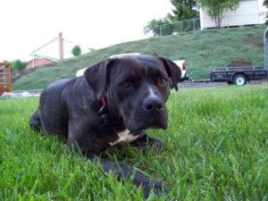 Roxy, Our Mascot!